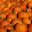 Stock Photo: Pile of pumpkin