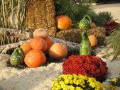 Pumpkin decoration — Stock Photo