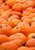 Mounted Pumpkins — Stockfoto