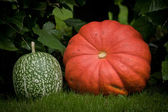Red and green pumpkin — Stock Photo