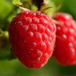 Raspberry — Stock Photo #30095127