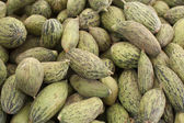 Immature Kelek mini-melons — Stock Photo