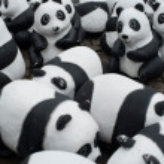 Panda Animal welfare organization — Stock Photo #33277711