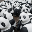 Panda Animal welfare organization — Stock Photo
