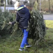 Stock Video: Christmas tree disposal after Christmas