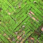 Moss — Stock Photo #27045465