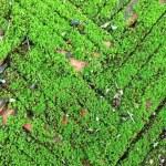 Moss — Stock Photo #27092375