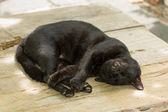 Black cat to sleep. — Stock Photo