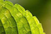 żółte liście wzorzyste — Zdjęcie stockowe