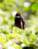 Butterfly — Foto Stock