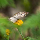 Butterfly on flower — Foto de Stock