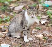 коричневая кошка — Стоковое фото