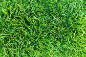 Grass,pattern — Stock Photo