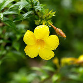 雨后的花朵. — 图库照片