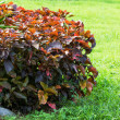 Stock Photo: Shrubs