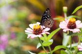 Schmetterling, insekt — Stockfoto