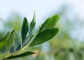 Folhas verdes — Foto Stock