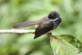 鸟类 — 图库照片