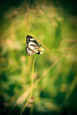 Papillon petite vignette — Photo