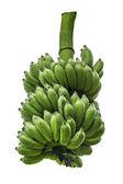 Plátano verde — Foto de Stock