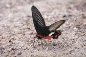 Kelebek, böcek — Stok fotoğraf