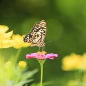 Mariposa en flor — Foto de Stock