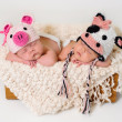 Sleeping fraternal twin newborn baby girls wearing crocheted pig and cow hats. — Stock Photo