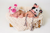 Sleeping fraternal twin newborn baby girls wearing crocheted pig and cow hats. — Stockfoto