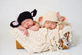 Newborn baby girls wearing black sheep and lamb hats. — Stock Photo