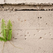 Plant Growing from Cement Wall — Stock Photo