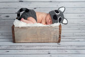 Newborn Baby Boy in a Raccoon Costume — Stock Photo