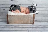 Newborn Baby Boy in a Raccoon Costume — Stock Photo