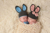 Twin pasgeboren baby's in bunny rabbit kostuums — Stockfoto