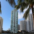 Tall business building and condominiums framed by palm trees — Stock Photo