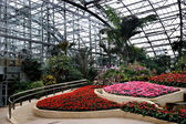 Chongqing Nanshan Botanical Garden greenhouse flowers and plants — Stock Photo