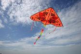 Under the blue sky flying kites — Stock Photo