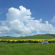 Inner Mongolia grassland Keerqin blooming canola flower — Stock Photo