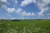 Inner Mongolia grassland Keerqin — Stock Photo