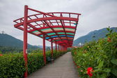 Shenzhen City, Guangdong Province, East Dameisha tea trestle valley wetlands — Stock Photo