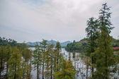 Shenzhen City, Guangdong Province, East Dameisha Tea Stream Valley wetlands — Stock Photo