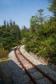 Miasta shenzhen, w prowincji guangdong, wschód dameisha herbaty dolina leśna pociąg — Zdjęcie stockowe