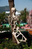 Ocean Park Hong Kong human bone specimens — Stock Photo