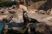 Hong Kong Ocean Park, Pacific Coast SEAL Museum — Stock Photo