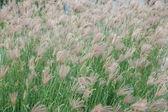 Hong Kong Ocean Park Ocean Plaza reed flowers — Stock Photo