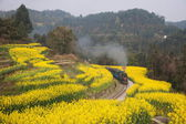 Traveling in Leshan City, Sichuan Qianwei Kayo small train station canola flower Bee Rock to the little train between — Foto Stock