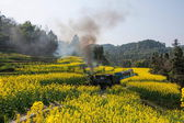 Traveling in Leshan City, Sichuan Qianwei Kayo small train station canola flower Bee Rock to the little train between — 图库照片