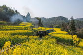 Traveling in Leshan City, Sichuan Qianwei Kayo small train station canola flower Bee Rock to the little train between — ストック写真
