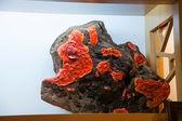 "Puli Township, Nantou County, Taiwan Thao Cultural Exhibition Center exhibition ""Ali fungi"" — Stock Photo"