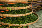 Taiwan's Chiayi City, Long Misato territory of a tea factory workers are hanging Oolong tea (tea first process: dry tea) — Stock Photo