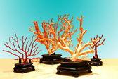 Taitung City Coral exhibition center exhibition of precious red coral — Stock Photo